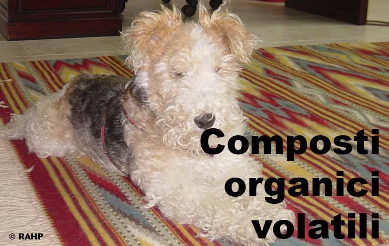 160_Olfatto cani