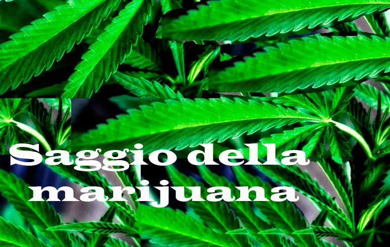 194_Marijuana