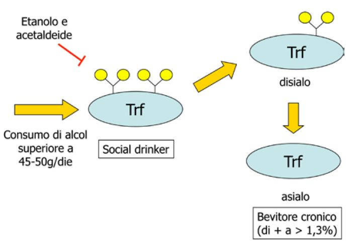 Fig.2 - isoforme Transferrina dopo abuso alcol