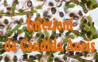 406_candida
