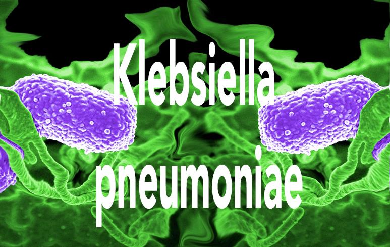 612_Klebsiella pneumoniae