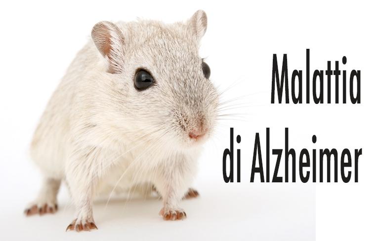 642_Alzheimer