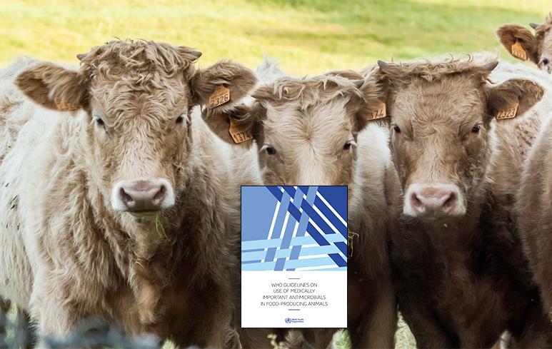 644_Antibiotici animali