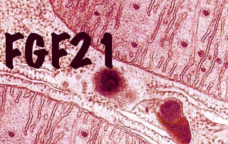 917_FGF21